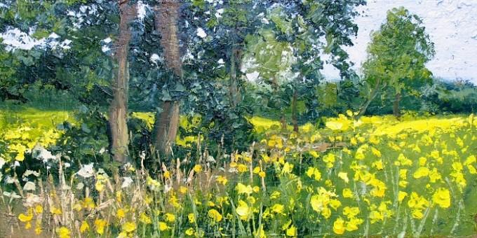 Wild Flowers & Seed