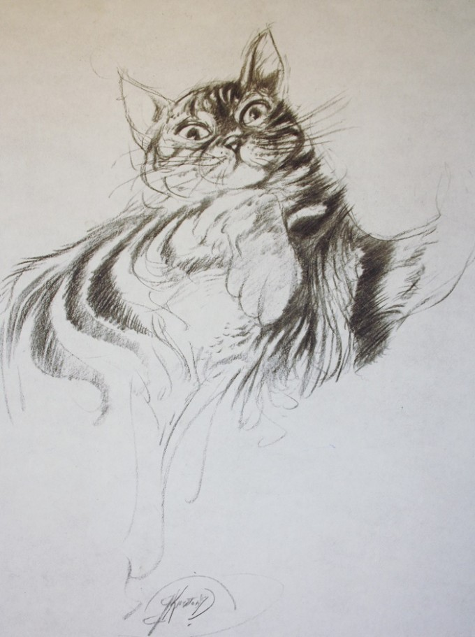 Cat Study IV